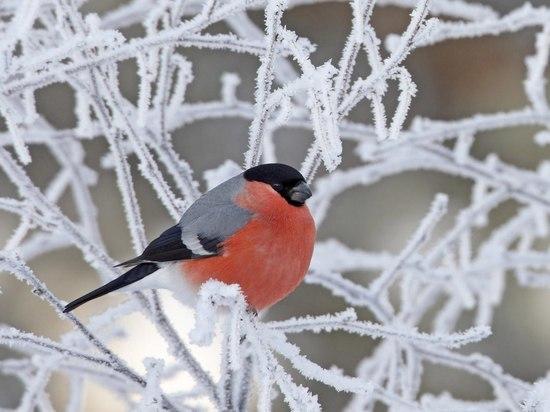 В Челябинской области до -7, снег, метели
