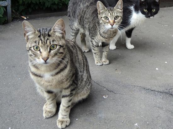 Полицейские отказались возбудить дело против москвички, выбросившей кошек из окна