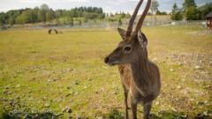 Животные в карельском зоопарке очаровывают туристов