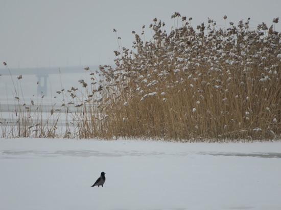 16 января будет ветер и, возможно, легкий снежок