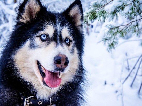 Ветеринары рассказали, как связаны салюты и переедание у собак