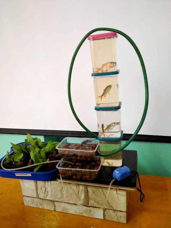 Школьницы из Железноводска изобрели авторский модуль для выращивания рыб