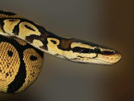 В Таиланде на женщину напала змея из унитаза