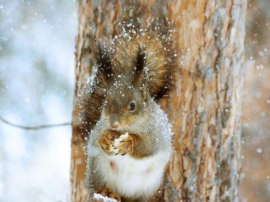 Небольшой снег и потепление обещают 19 января забайкальцам