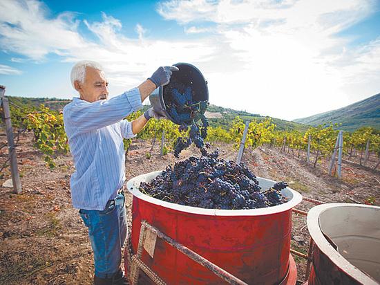 Не является вином: что пьют потребители под видом благородного напитка