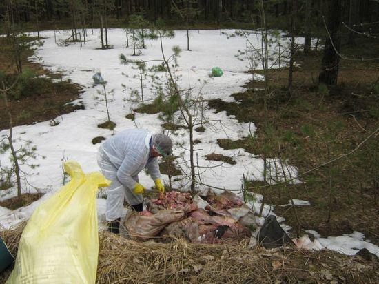Свалка шкур животных выявлена в Калужской области