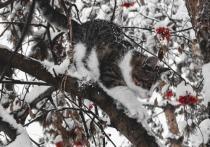 Во вторник в Рязанской области пойдет мокрый снег
