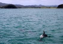 За вылов дельфинов в Темрюке осудили 7 человек