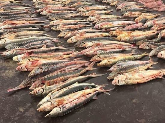 Брянских браконьеров задержали в Дагестане