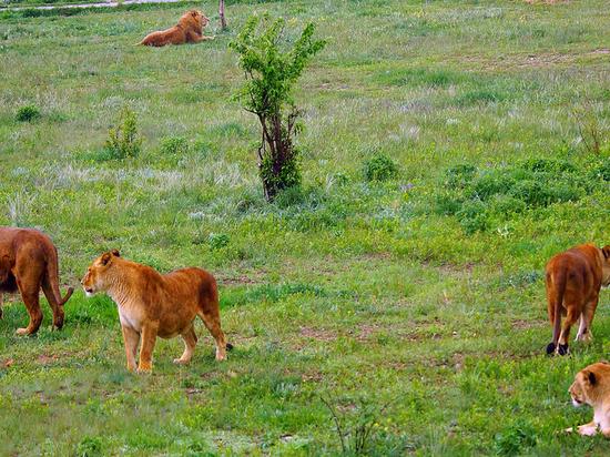 В Крыму парк львов