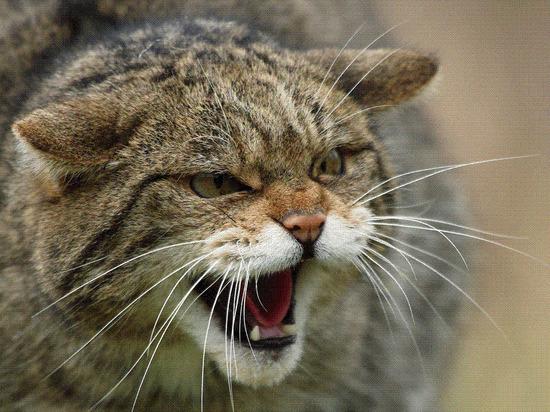 Разъяренная кошка два дня держала хозяйку на кухне в Архангельске