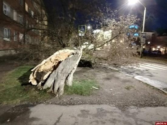 Сегодня Псковская область попадет в эпицентр шторма
