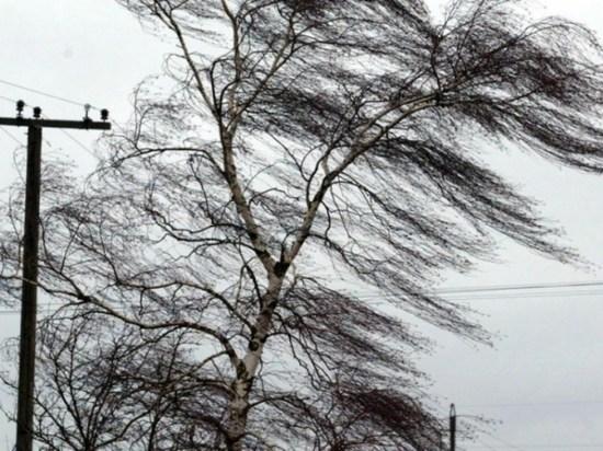 Шквальный ветер оставил без электричества около девяти тысяч жителей Миньяра