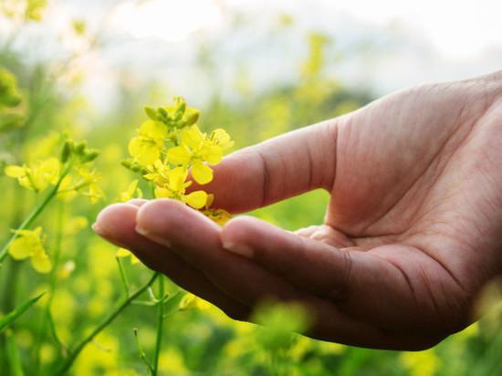Сельское хозяйство Тульской области: достижения, проблемы, перспективы
