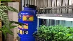 Крымские мичуринцы выращивали коноплю в заброшенной котельной
