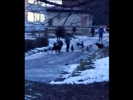 Жители Алексина выложили видео собачьей своры на школьном дворе