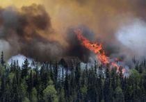 Счетная палата назвала ущерб от пожаров в Забайкалье