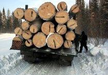 «Черных» лесорубов поймали с грузовиком берез в Забайкалье