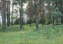 Минлеса Приангарья расторгает договоры на рубку леса в заказниках