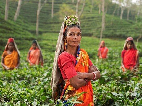 Гастроэнтеролог сообщила, кому противопоказан зеленый чай