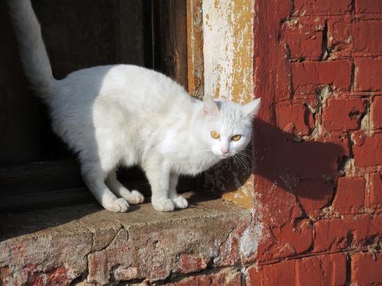 Против москвички, выбросившей кошек из окна, все же возбудили дело