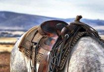 Москвичка засудила гостиницу, дважды упав с лошади на экскурсии