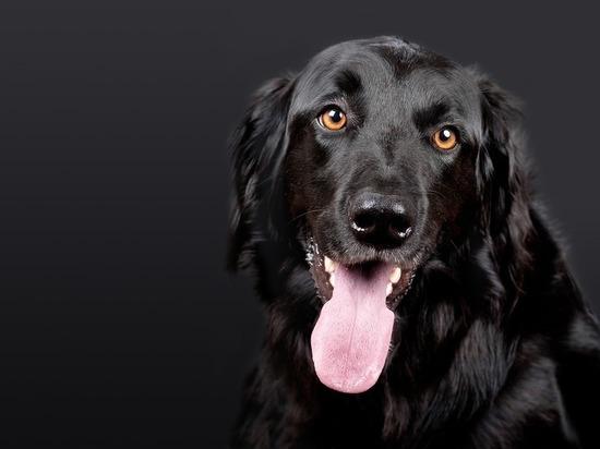 Петербуржца, выбросившего собаку из окна, будут судить