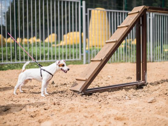 В Серпухове появится площадка для выгула собак