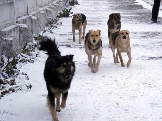 Собак, искусавших 7-летнего ребёнка в Улан-Удэ, отловили
