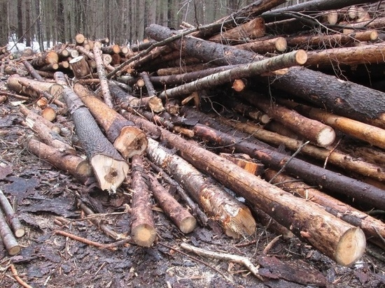 На 70 млн нарубили леса в Тайшетском лесничестве