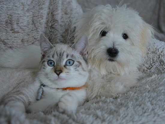 Россияне стали лучше следить за питанием кошек и собак