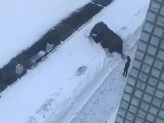 Итальянские слоны сбежали от дрессировщиков ради купания в снегах Урала