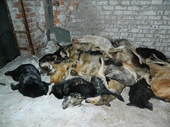 За белгородское «кладбище собак» могут дать 3-5 лет