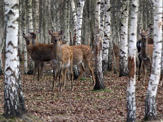 Законопроект о вольерной охоте подкрепили новыми аргументами