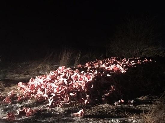 Экологи ищут виновных в свалке отходов крупного рогатого скота в Курском районе