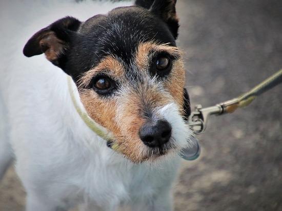 Управление ветеринарии: «Собак в 111 квартале в Улан-Удэ практически нет»