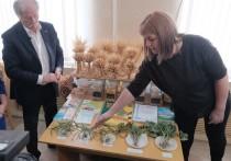 На Ставрополье наращивает обороты собственное семеноводство