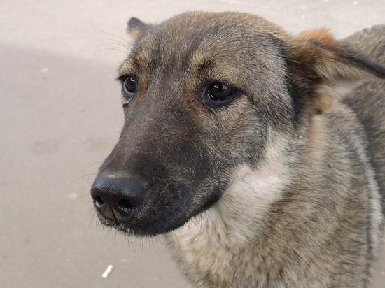 СМИ: в аэропорту Пулково сотрудник расстрелял собаку