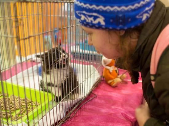 «Приютских» кошек раздавали в Петрозаводске: половина кандидатов пристроена