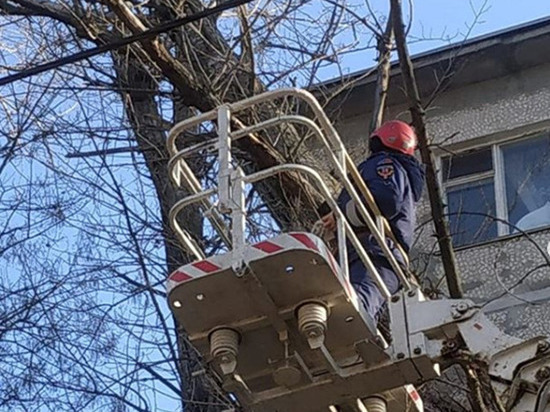 Большое дерево упало возле многоэтажки в Ростове