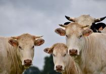 КЧР и Ингушетия лидируют по приросту молочной продуктивности в России