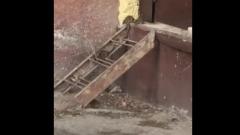 Уличных крыс в центре Астрахани сняли на видео горожане