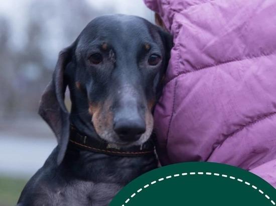Пскович преодолел 1400 км, чтобы вернуть свою собаку