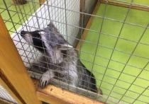 Больше всего зоозащитники бились за закрытие контактных зоопарков
