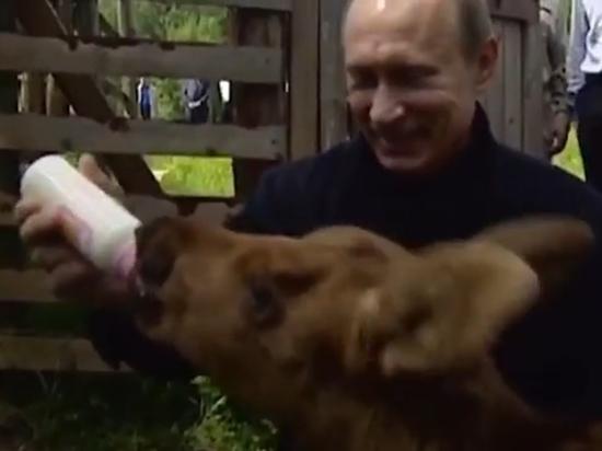 Кремль опубликовал видео вскармливания Путиным лосенка