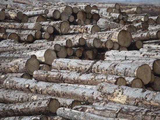 Жители сел Забайкалья пожаловались Осипову на вырубающих лес китайцев