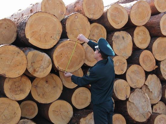 Две ОПГ контрабандистов леса и драгметаллов раскрыты в Забайкалье