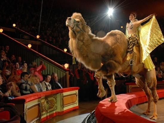 На Украине собрались запретить цирк с животными