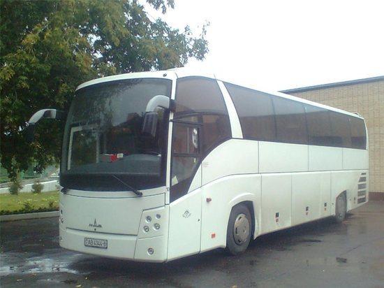 Брянцам предложили расписать новый автобус ФК «Динамо»