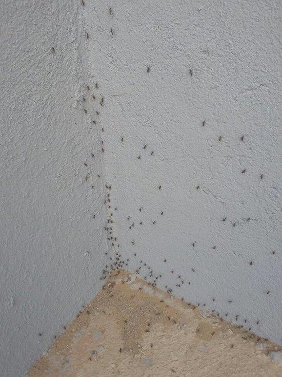 В Гагарине в Смоленской области многоквартирный дом атаковали комары